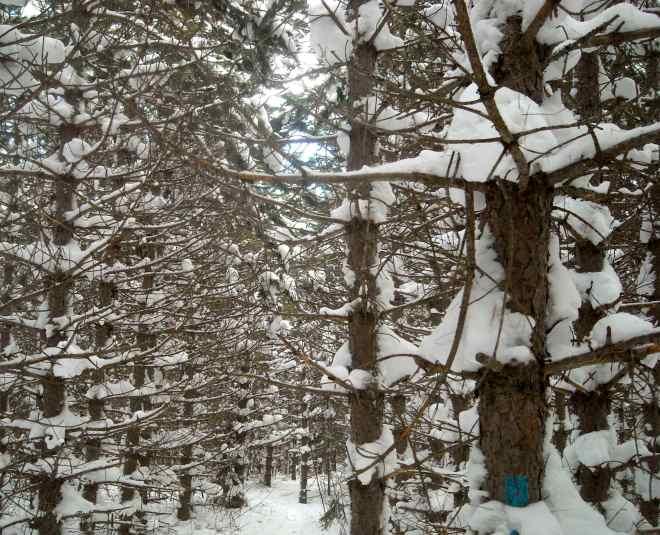 Brian_Beatty_Minnesota_Winter_Trail